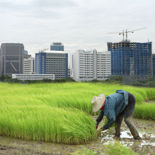 person planting rice in paddy