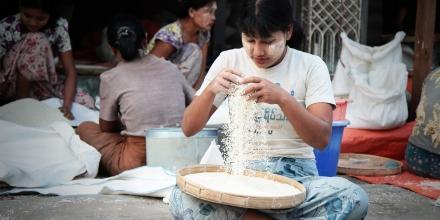 Sorting rice in Sittwe