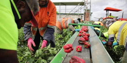 8,000 seasonal workers by 2025 from PNG
